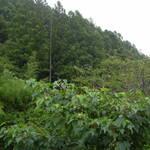 山間部の湿度は高い。