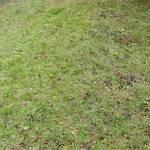 案外雑草が少ないので、草刈もそれほど時間もかからないと思った。