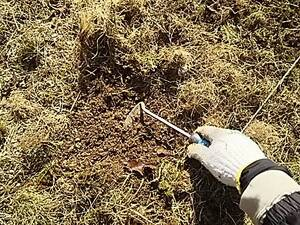 ジャガイモの種イモ、植え付けるところの土を出していく。