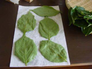 洗浄後、水滴をとる:柿の葉茶の作り方