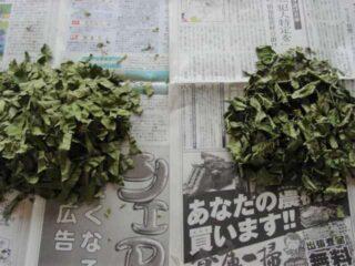 葉を3ミリほどに刻む:柿の葉茶の作り方